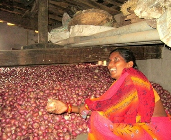 Onion Cultivation In Kalahandi- AJSA India-Orissa-Kalahandi-M.rampur