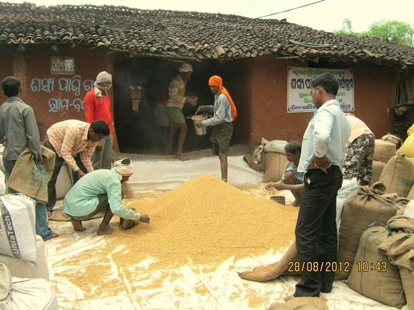 Grain Bank manged by communities-AJSA Orissa,India-Bolangir (3)