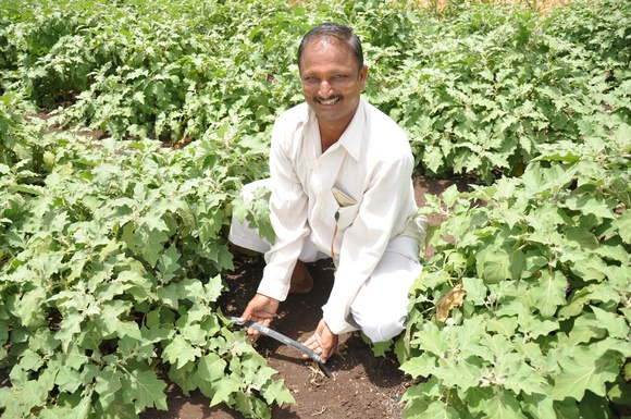 A KB Drip user in his eggplant field in Maharashtra