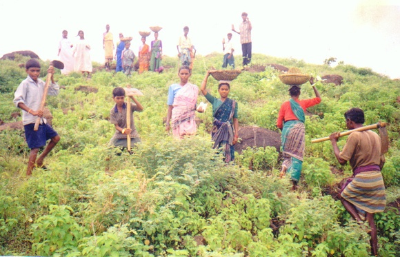 Plantation in Bolangir- AJSA India-Orissa-Bolangir